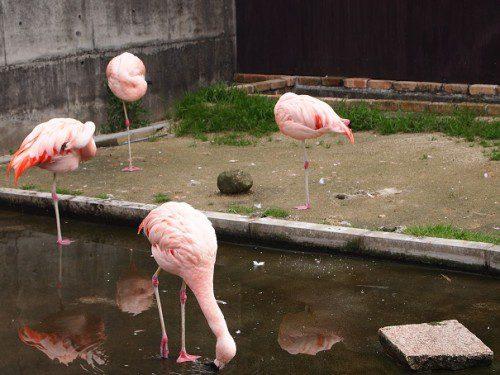 山地獄動物園フラミンゴ別府