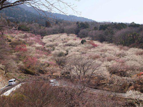筑波梅祭り展望台